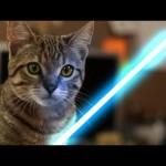 Se gatos usassem a Força