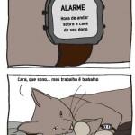 trabalho-do-gato