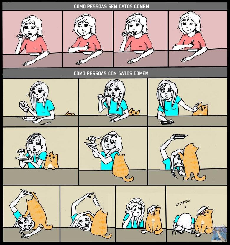 comer com gato