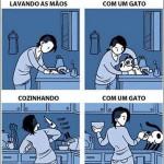 vida gato