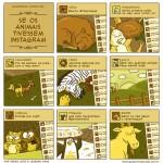 animais instagram