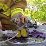 O salvamento de um gatinho em primeira pessoa