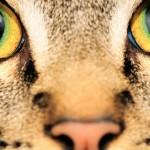 Como os animais vêem o mundo