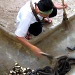 O que o veneno de cobra faz com o seu sangue