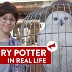 E se o Harry Potter estivesse mesmo procurando a plataforma 9 3/4